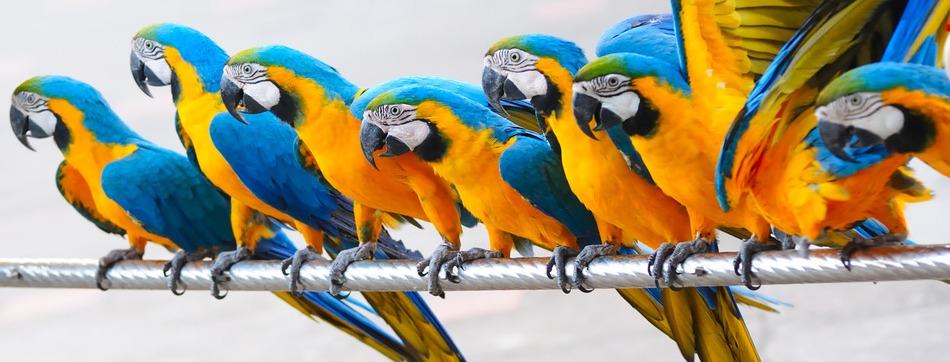 Tierarztpraxis Weiterstadt, Vögel und Reptilien